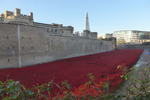 Tower med poppies